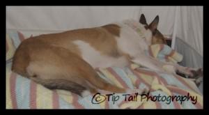 Tatum Sleeping