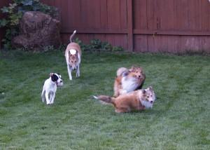 Fun in the Yard