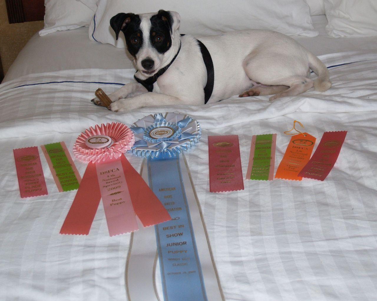 Best In Show Puppy!