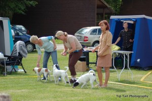 Breeder Group - Danish Swedish Farmdogs, Denmark