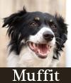 Muffit