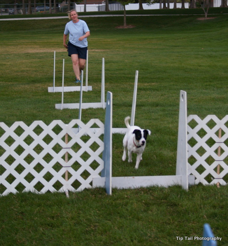 Jet Flyball Training
