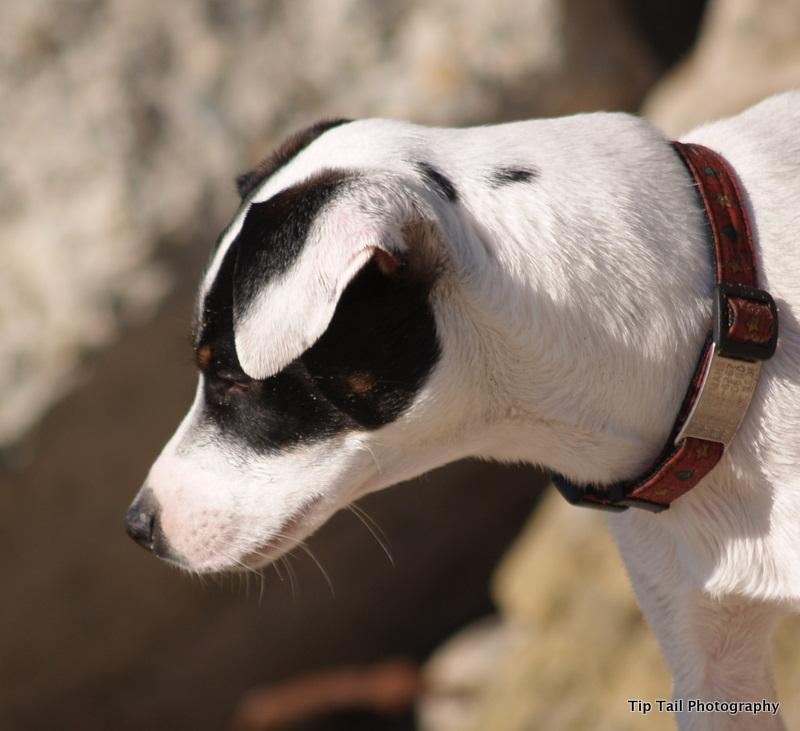 Farmdog