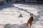Jet and Tatum in the Snow