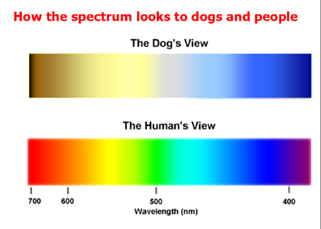 Dog Color Vision
