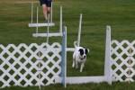 Jet Flyball Training