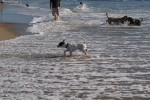 More Dog Beach Pics