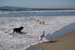 Danish-Swedish Farmdog Beach